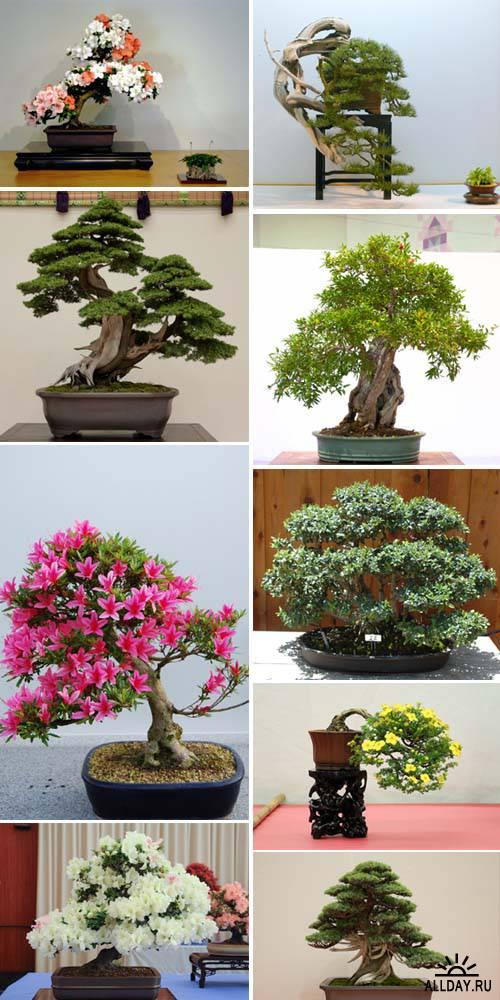 Art of Bonsai and Penjing p.6