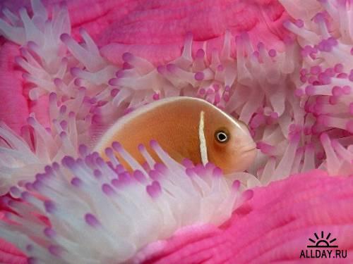 Ocean Life wallpapers HD