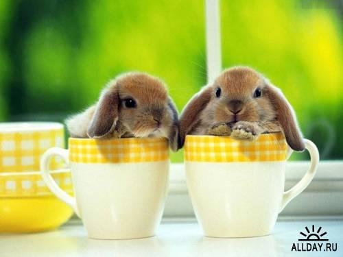 Зайцы и кролики