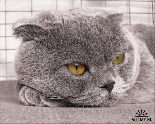 Photos of Animals #10 - Cats