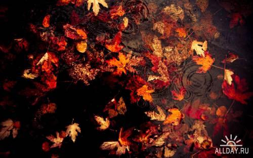 Incredible Mixed Wallpapers Set 239