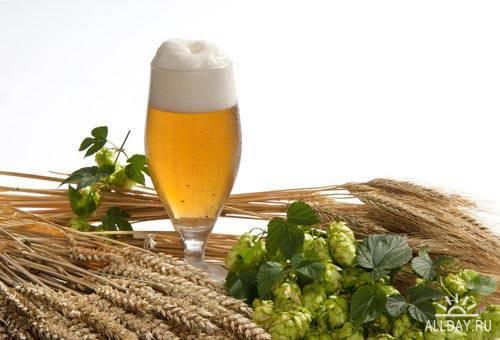 Бокал пива 3   Glass of beer 3