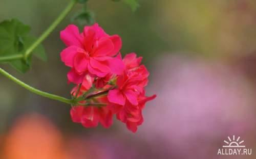 Цветы в сборнике обоев для рабочего стола 35