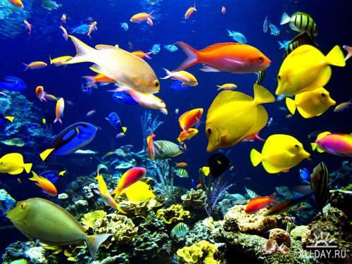 Фотоколлекция - удивительный подводный мир