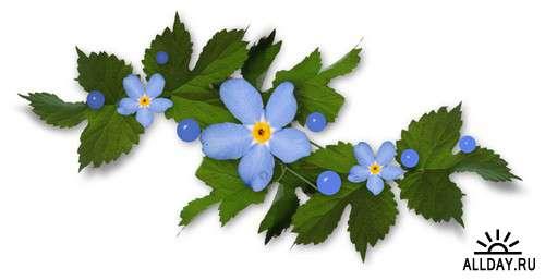 Эти синие цветы - клипарт PNG