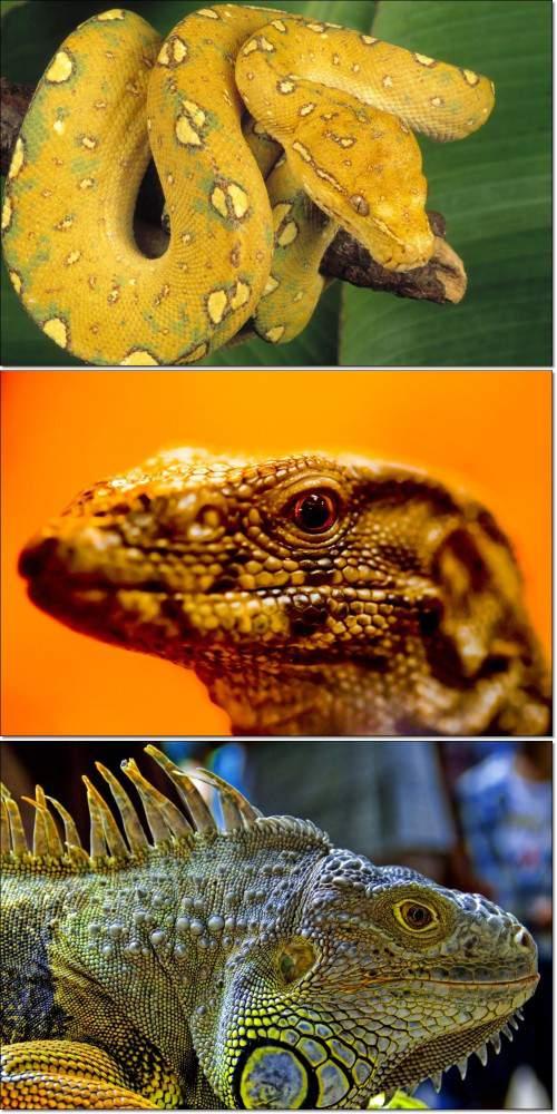 Удивительные животные - рептилии и лягушки