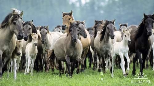 Прекрасные кони и лошади (фотосток)