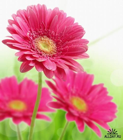 Wild Flowers 2   Полевые цветы 2