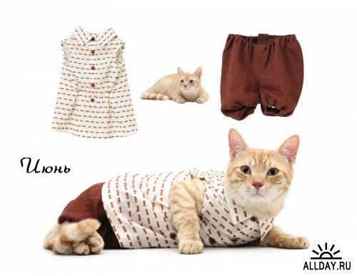 Модные кошки