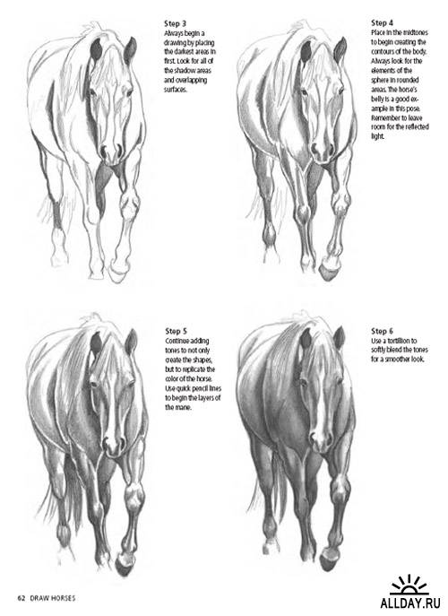 Draw Horses (Discover Drawing Series)