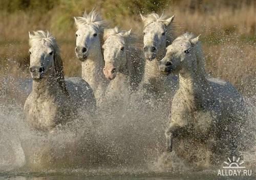 Фотосток – Лошади 5