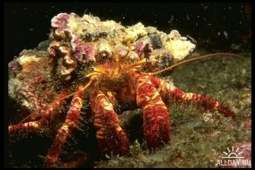 Клипарт - Underwater Life