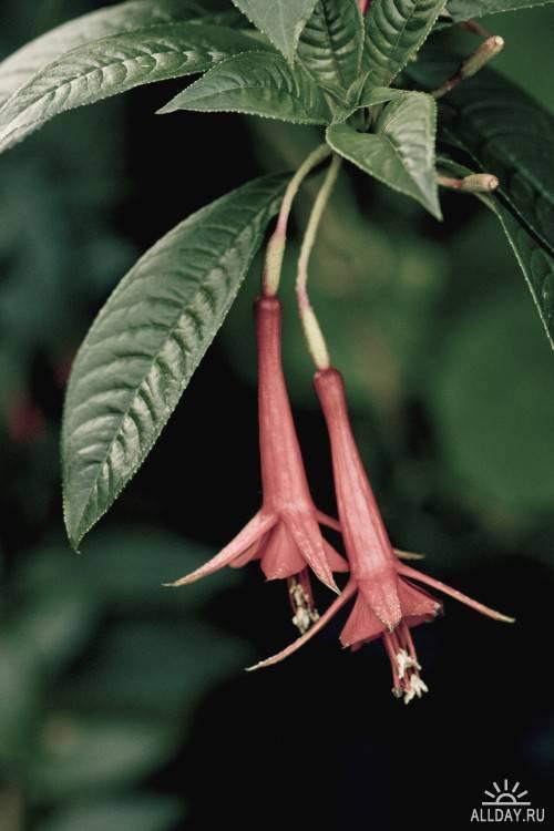 Фотосток Цветы 2
