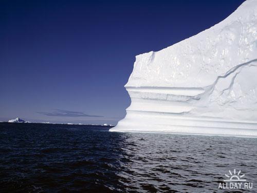 Обои Айсберги