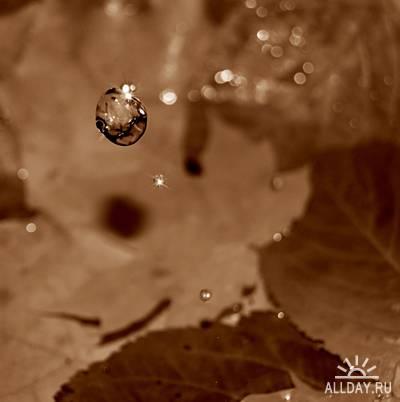 Капли воды и листья
