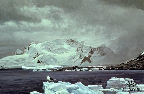 Роберт Бейтман - канадский художник и натуралист.