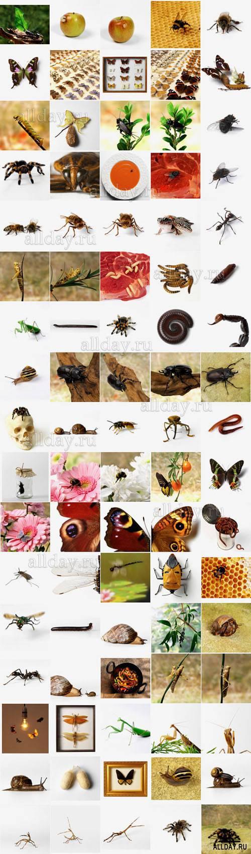 Polka Dot Images ITF139 — Bugs