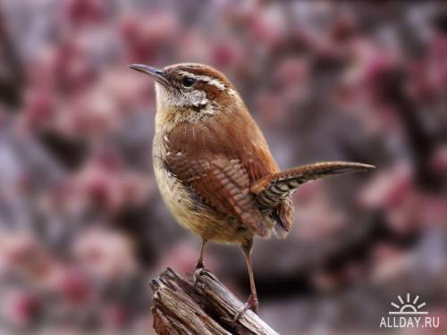 Фотосток – Птицы 3