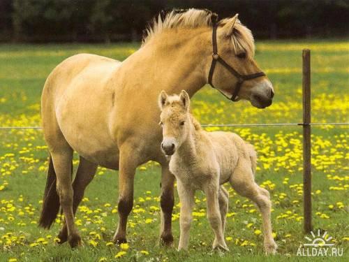 Фотосток – Лошади 9