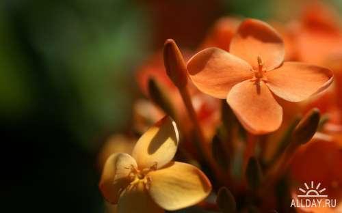 Коллекция прекрасных фото цветов для рабочего стола выпуск 40