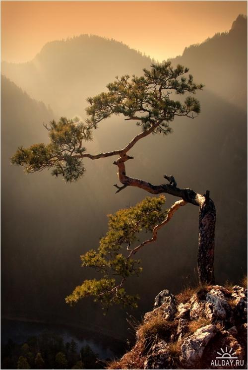 Мир в Фотографии - World In Photo 52