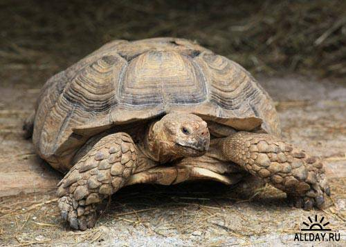Stock Photo: Turtles 4 | Черепахи 4