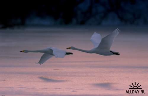 Мир в Фотографии - World In Photo 880
