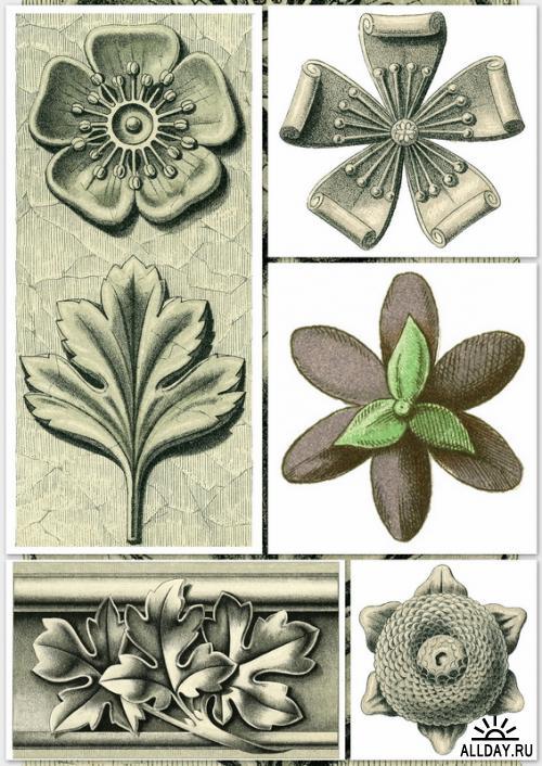 Plants & Flowers as Ornament (DOVER)