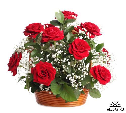 Красные розы | Red Roses - UHQ Stock Photo