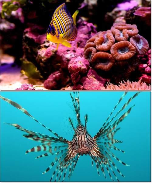 Удивительные животные - морские обитатели