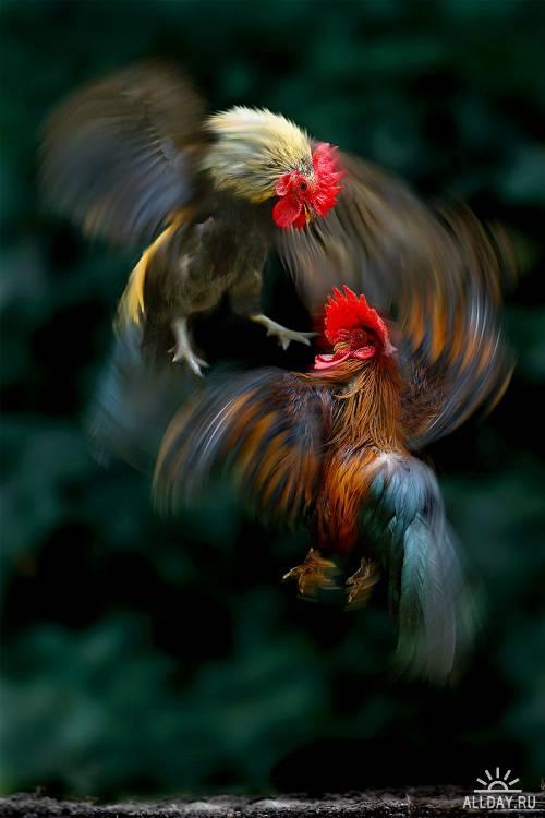 Фотограф Sam Lim