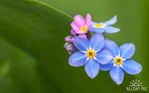 Прекрасные цветы для фона рабочего стола