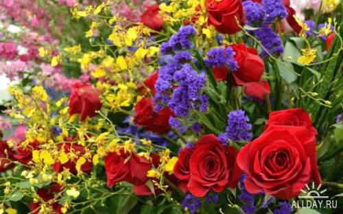 FlowersWallpapers 1