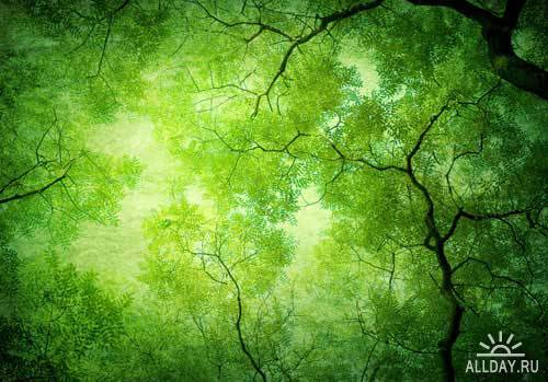 Stock Photo: Green leaves background | Зеленый фон с листьями
