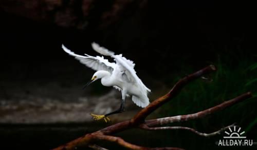 Мир в Фотографии - World In Photo 701