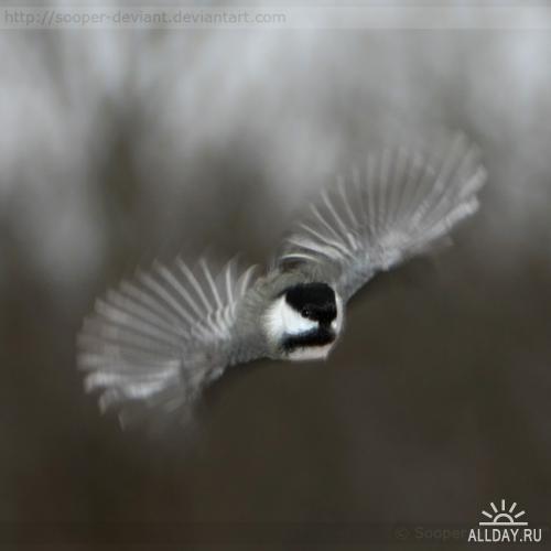 Nature - Sooper
