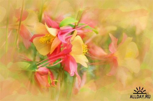 Цветы Alberto Guillen