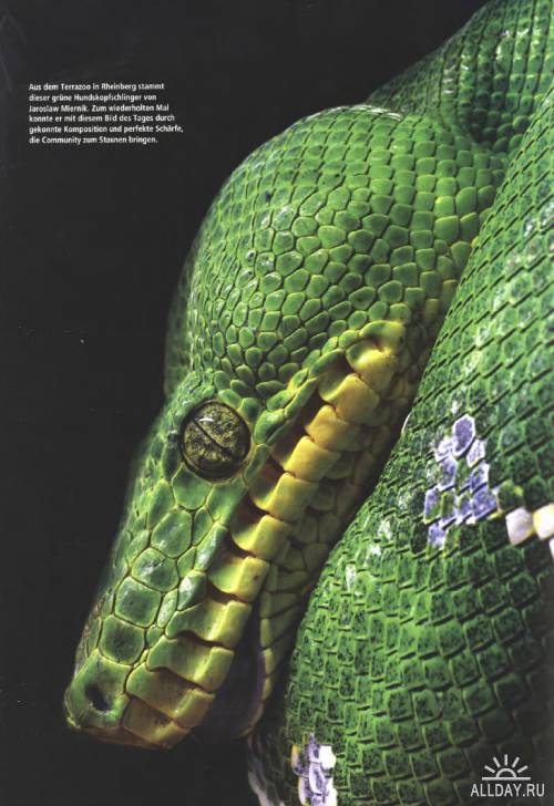 c't Spezial Digitale Fotografie №3 Juni-September 2012