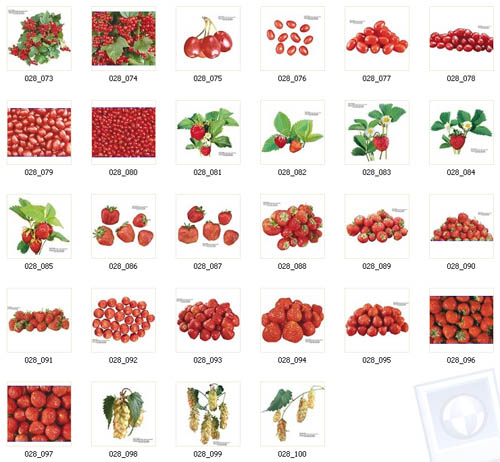 Berries | Ягоды