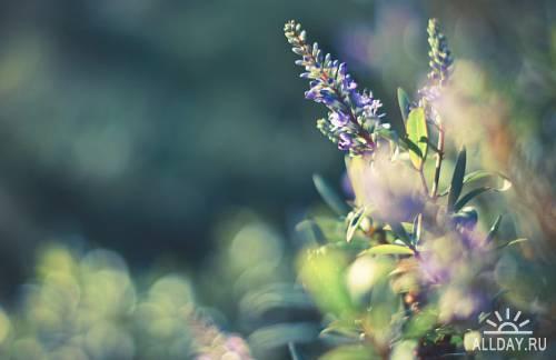 Zen-photo ч.62