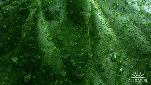 Drops water, rain and dew on leaves and flowers 3 | Капли воды, дождя и росы на листьях и цветах 3