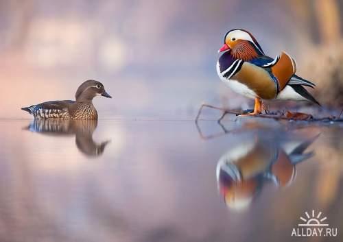 Мир в Фотографии - World In Photo 915