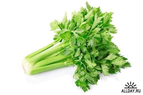 Сельдерей - Растровый клипарт   Celery - UHQ Stock Photo