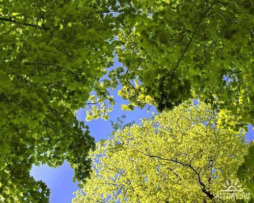 Великолепные красоты природы № 38