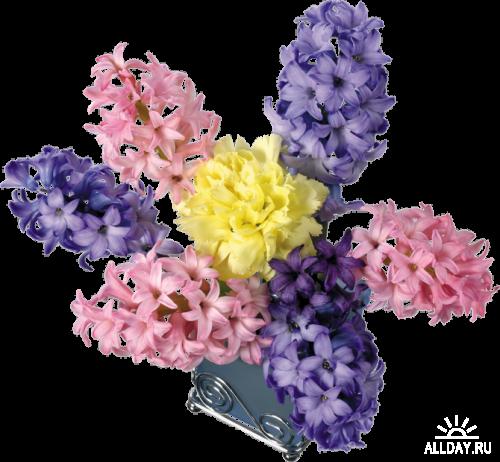 Hyacinth Гиацинт Нежнейший аромат